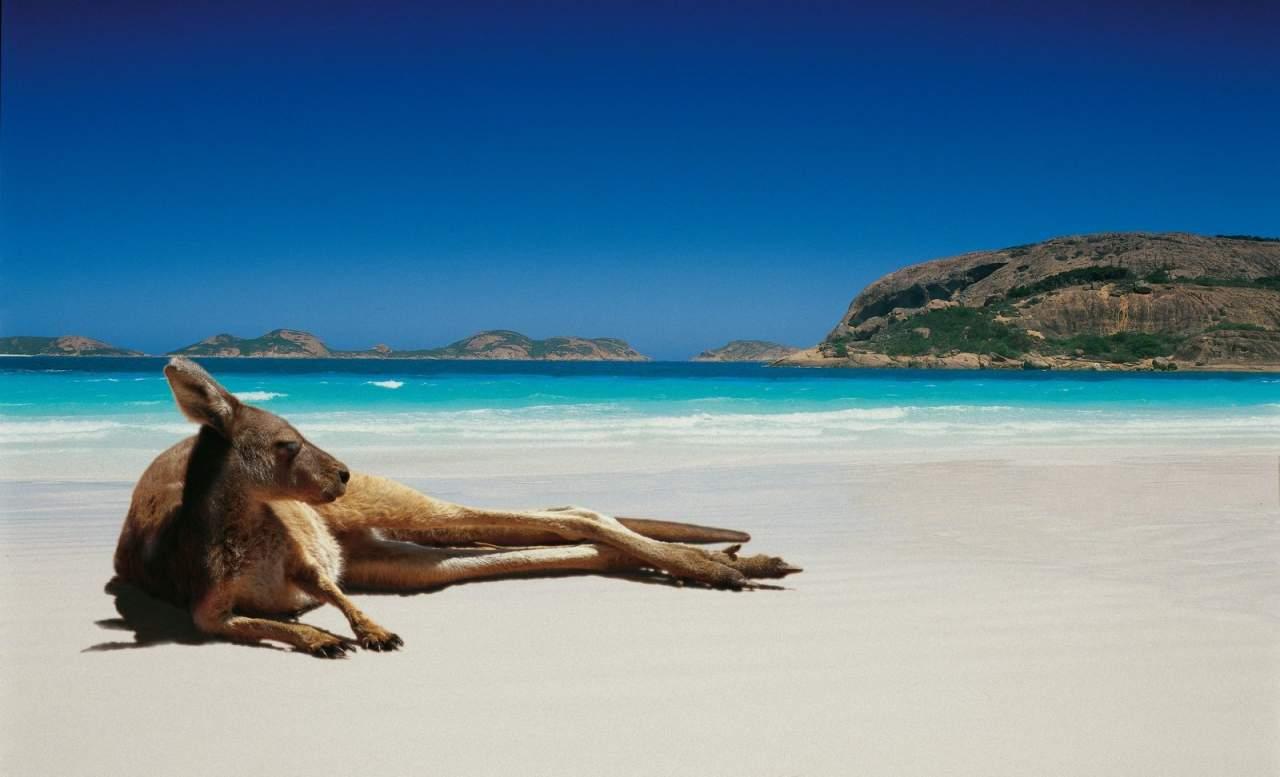 canguru-praia-descansar