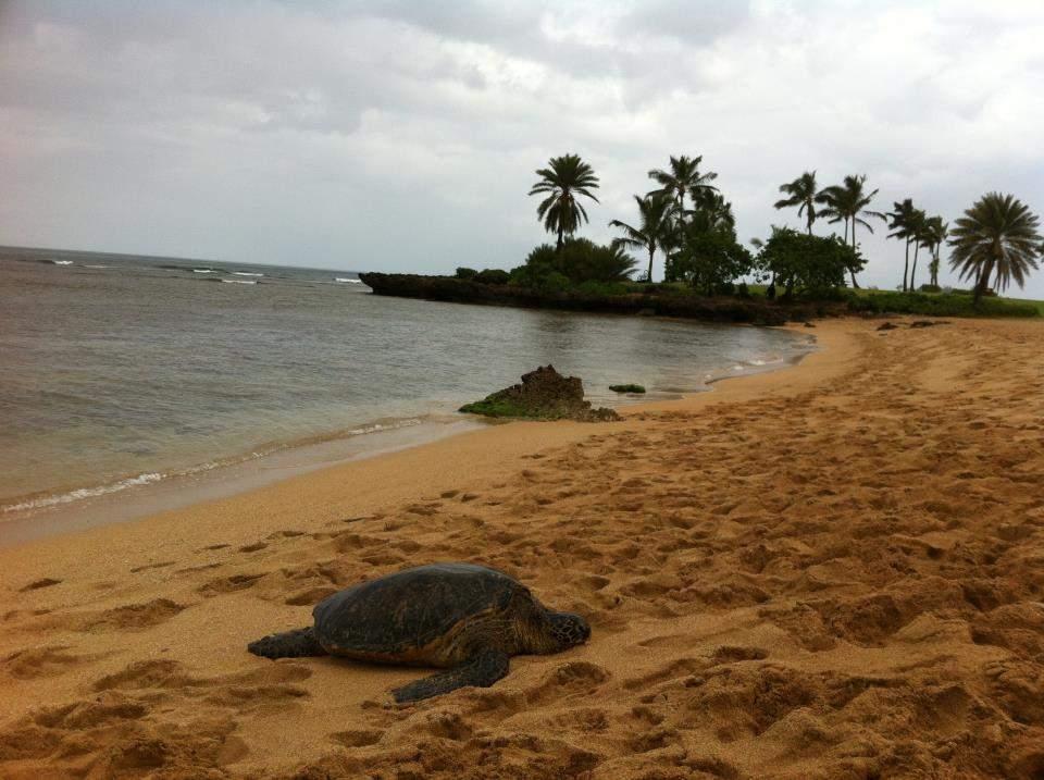 Olha quem encontramos depois do treino descansando na areia! As meninas viram muitas tartarugas e peixes no mar enquanto estávamos nadando. Eu estava com muito medo para reparar em qualquer coisa.