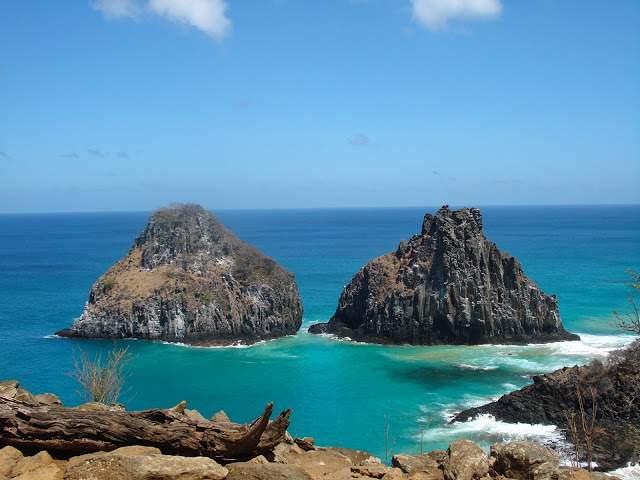 febaaab2f Na ilha de Fernando de Noronha, é possível conhecer espécies da flora  específicas, diferentes das outas, porque há uma peculiaridade no  ecossistema marinho ...