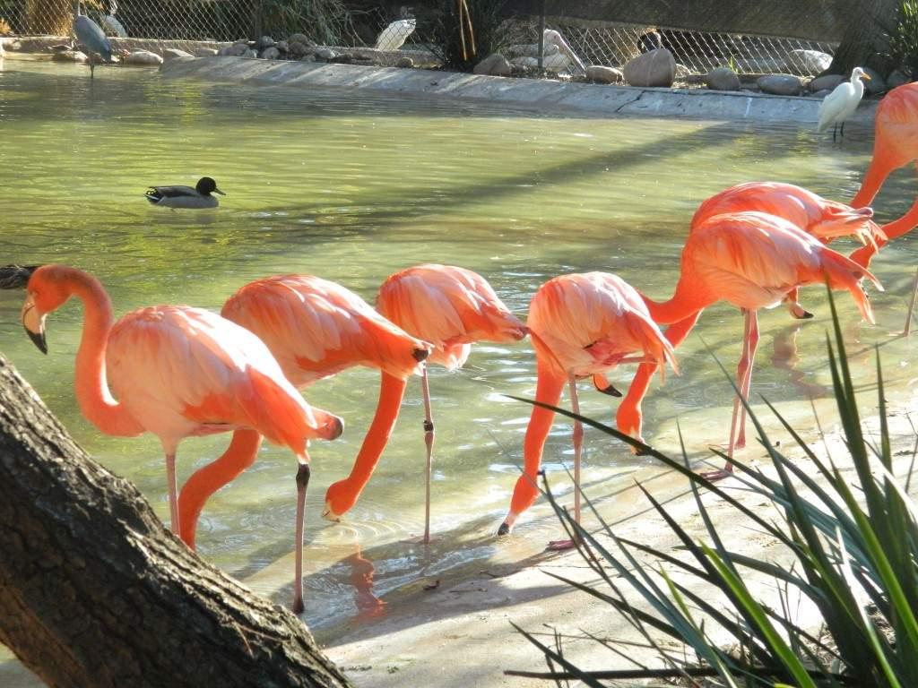 Os lindos Flamingos!