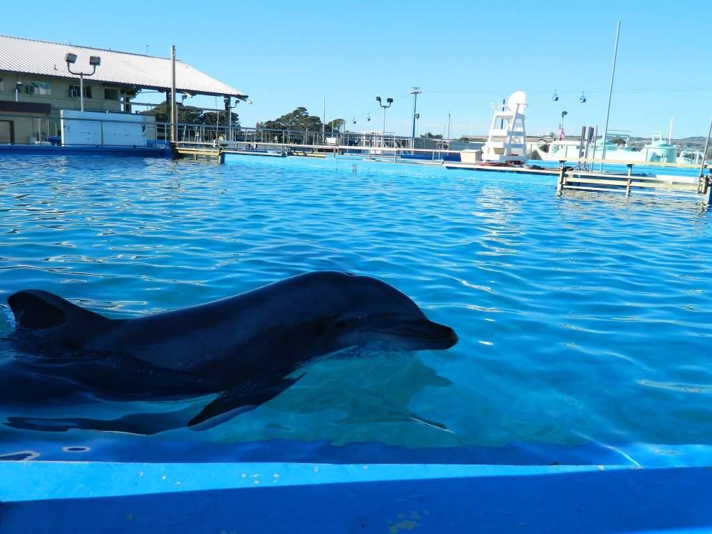 Os golfinhos ficam nesses pequenos tanques. Nesse tanque poe exemplo, haviam 3 golfinhos, espaço que para mim não parece ser suficiente para uma vivência saudável.