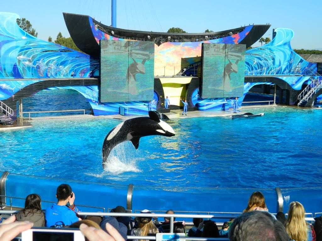O show das baleias orcas. Um dos mais famosos do parque.