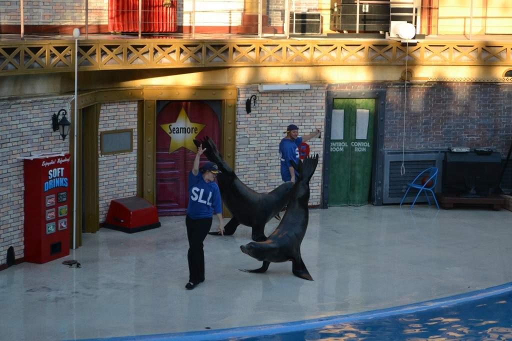 O show das focas não é tão popular comparado com o dos golfinhos ou das baleias orcas, mas é bem mais divertido. Elas dançam, fazem malabarismo e piruetas.