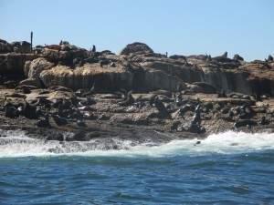 Ilha das focas! Fofas e grandes!