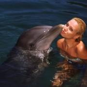 Quanto custa nadar com Golfinhos em Cancun?