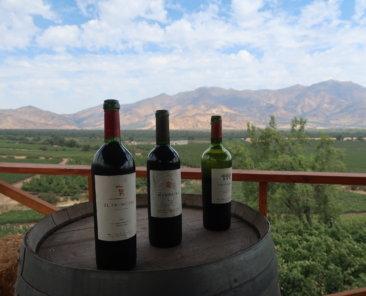 vinicola-el-principal