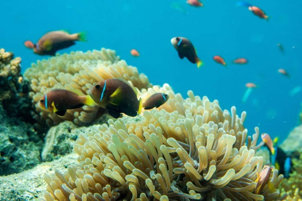 melhor-época-para-ir-pras-maldivas-mergulho
