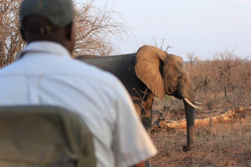 Safári no Parque Kruger - Estevam pelo Mundo